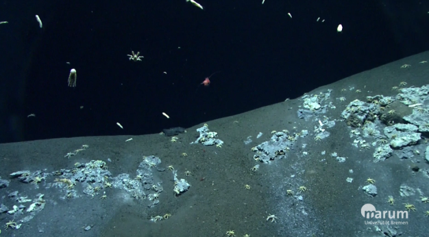 Leben auf dem Meeresboden. Krebse und Tintenfische leben in der Dunkelheit. Copyright: marum Universität Bremen